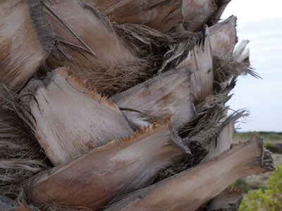 Beeindruckende Impression von Stamm einer Palme