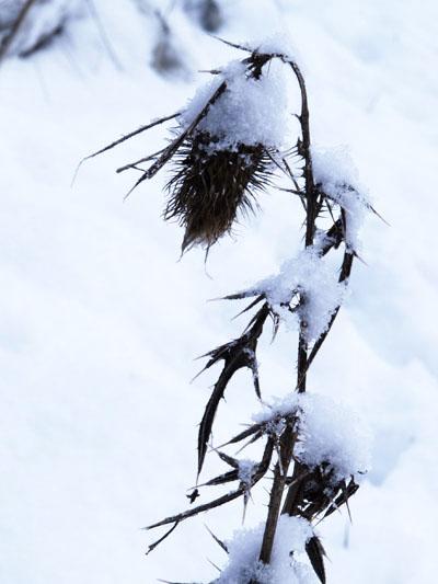 Winterlanschaften in Bremen, Birte Kühl Fotograf