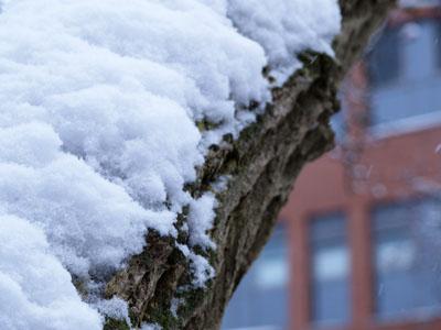 Winterlanschaften in Bremen, Birte Kühl Reportrage im Schnee